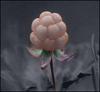 Doveberry