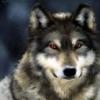 ironwolf777