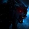 darkwolves321