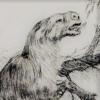 Orophodon